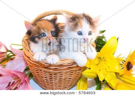 Little Kitten In A Basket