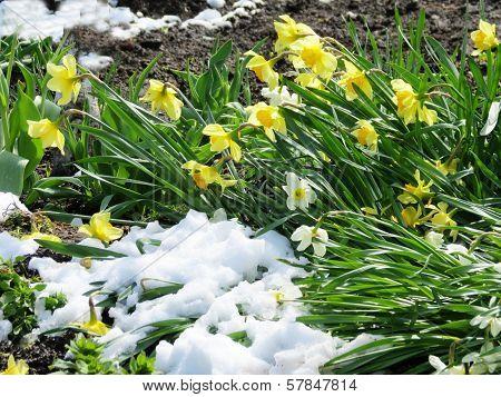 Spring etudes