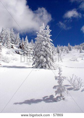 Plántula de nieve