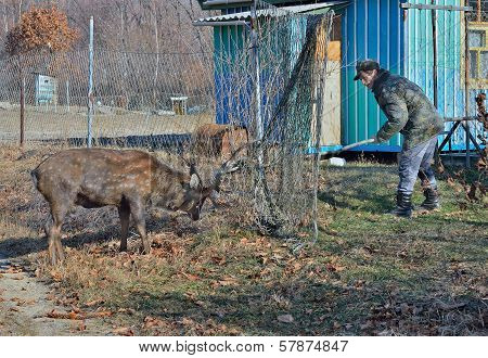 Rescue Of Deer