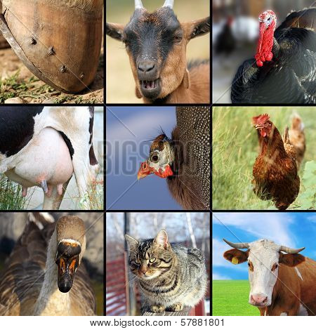 Collection Of Different Farm Animals