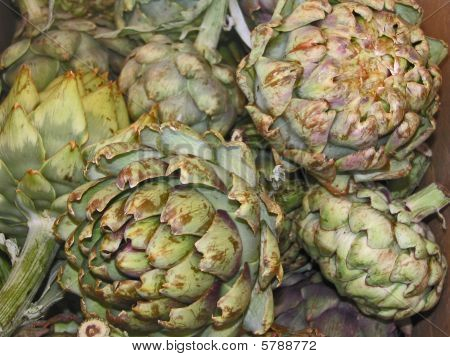 Artichokes Harvested And Ready For The Pot