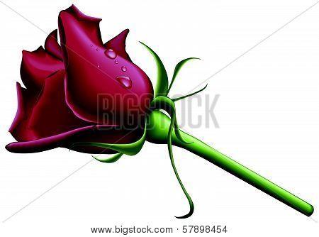 Red rose.eps