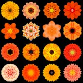 picture of kaleidoscope  - Big Collection of Various Orange Flowers - JPG