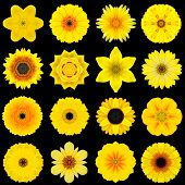 stock photo of kaleidoscope  - Big Collection of Various Yellow Flowers - JPG