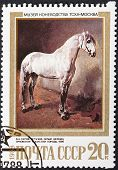 Gray Orlov Trotter Breed Horse