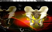 stock photo of pubis  - Digital illustration  of pelvic girdle in    colour background - JPG