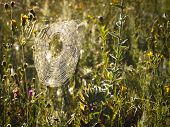 stock photo of spiderwebs  - Plant which is secured spiderweb in sun day - JPG