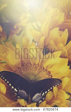 Sunflowers And Butterflies In Retro