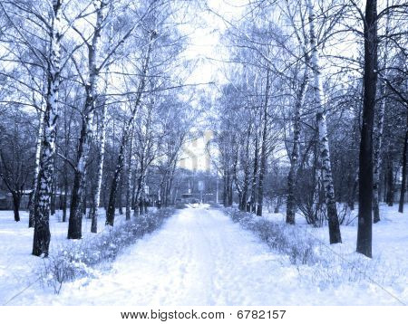 Winter Road, Path With Big Birches.