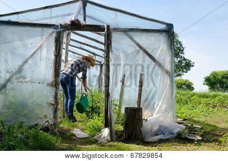 Gardener Woman With Watering Plants In Greenhouse