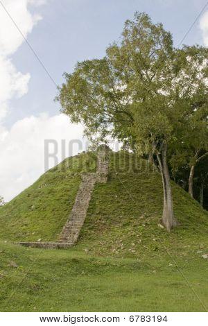 Myan Stairway At Altun Ha