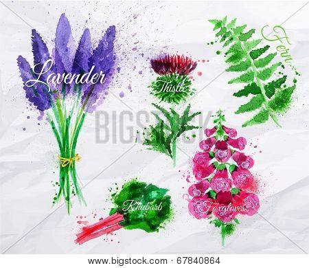 Flower grass lavender, thistle, foxgloves, fern, rhubarb