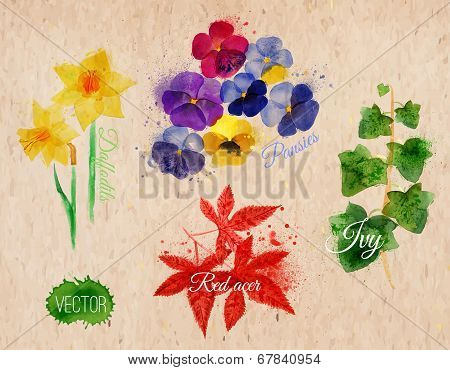 Flower grass daffodils, pansies, ivy, red acer kraft