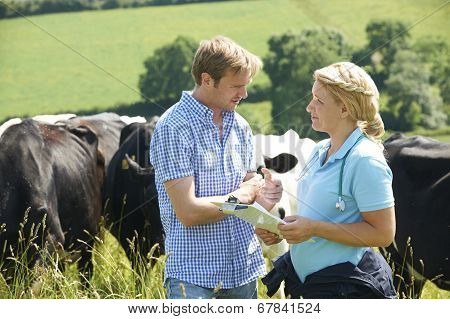 Dairy Farmer Talking To Vet In Field With Cattle In Background