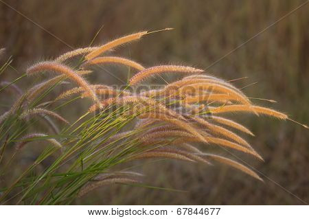 Grass Together In A Group
