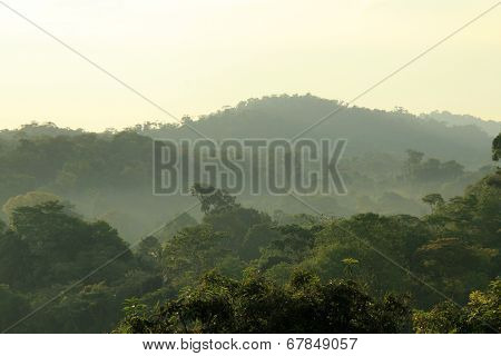 Rainforest Morning Mist