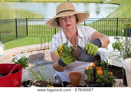 Senior Lady Removing A Rootbound Pot From A Pot
