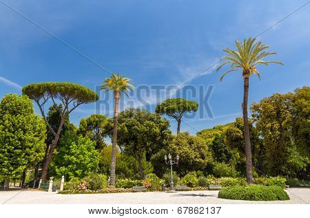 Tropical Trees On Piazzale Napoleone I In Rome, Italy