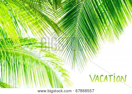 Palm tree leaves border isolated on white background, studio shot, copy space, tropical nature, summer vacation and holidays concept