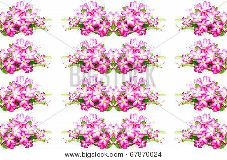 Impala Lily Flower