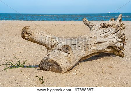 Snag On The Beach