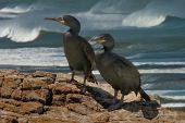 Male And Female Shags