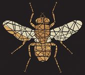 image of blowfly  - Shattered mosaic illustration of a common fly - JPG