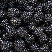 picture of blackberries  - Ripe blackberries background - JPG