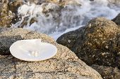 picture of oyster shell  - Sea shell with pearl on the sandy beach - JPG