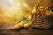 stock photo of thanksgiving  - Autumn nature concept - JPG