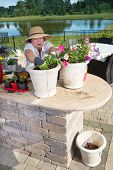picture of rich soil  - Senior lady preparing ornamental plant pots to decorate her outdoor patio bedding down the new plants with rich compost and soil in a summer kitchen in a rural garden with a lake - JPG