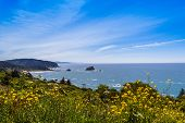 image of klamath  - Coastal view of the northern California Coastline in the Redwood National and State Parks yello flowers blue wate and blue sky - JPG