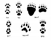 stock photo of animal footprint  - this is a set of animal footprints - JPG