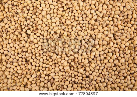 Soybeans As Background
