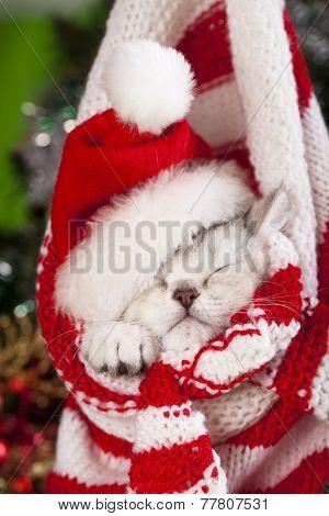 Little kitten wearing Santa  hat sleeping inside  knitted hat