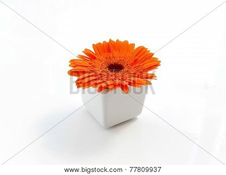 Orange Chrysanthemums In White Vase