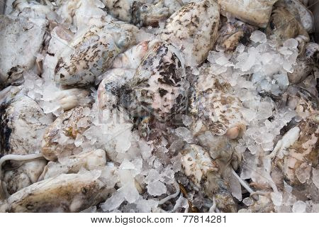 Fresh Cuttlefish For Sale On Greek Island Kalymnos