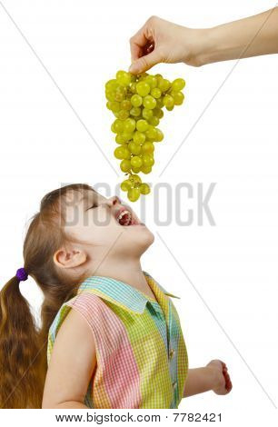 Cheerful Child Eats Grapes From Parental Hands