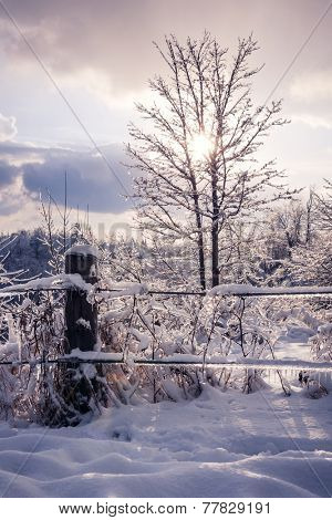 Landscape of fence, plants and trees covered in ice after snowstorm. Ontario, Canada.