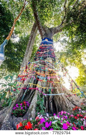 Three Fabric Color Wrap The Old Tree, The Belief In Thailand