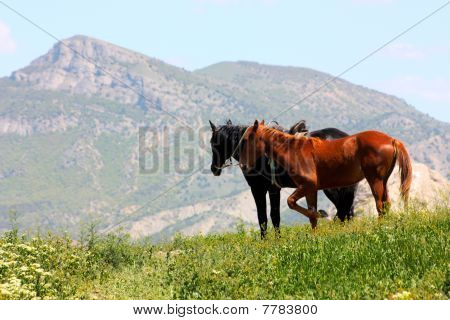 Black and red horses in the mountains