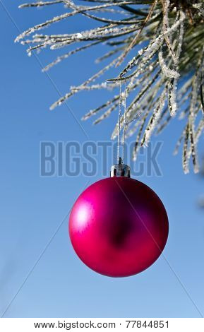 Christmas-tree Decoration On A Pine