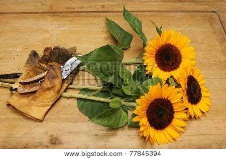 Cut Sunflowers