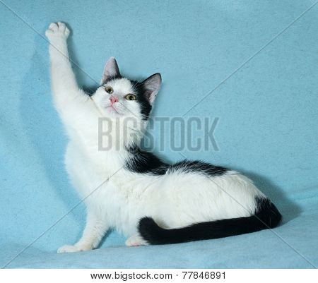 White With Black Spots Kitten Sharpening Claws On Sofa