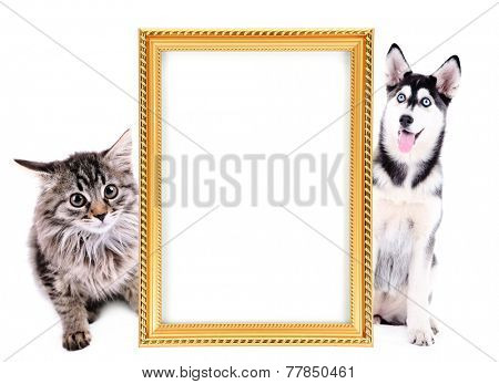 Little kitten and  husky puppy with frame isolated on white