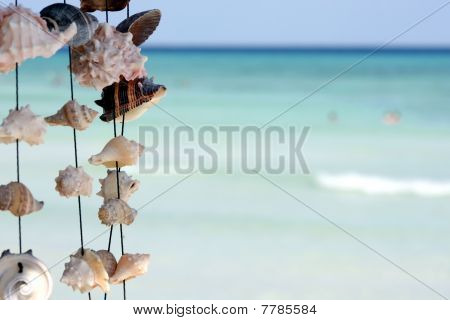 seashells on ocean background