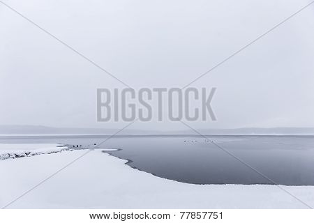 Sparse Winter Landscape