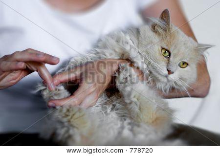 Frau Holding cat