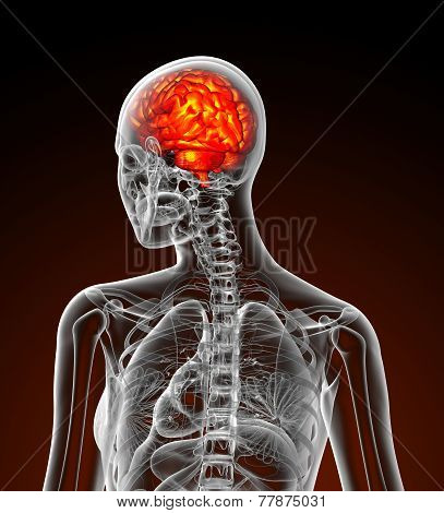 3D Render Medical Illustration Of The Human Brain